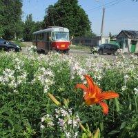 Уличные наблюдения: Иные времена - иные цветы и трамваи!!!... :: Алекс Аро Аро