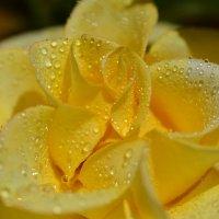 То ли роза, то ли брошь... :: Тамара Бедай