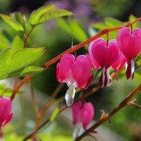 Мамины цветы :: skijumper Иванов