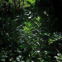 В джунглях :: Александр Сапунов