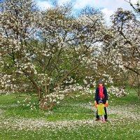 Рижский ботанический сад. :: Liudmila LLF