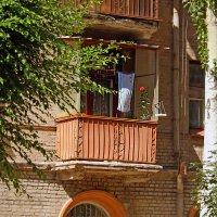 Цветок на балконе. :: barsuk lesnoi