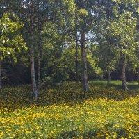 Природа рисует весеннюю картину :: Виталий