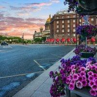 Цветы у Исаакия :: Юлия Батурина