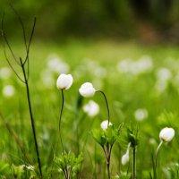 Крошечки цветочки) :: Виктория Большагина