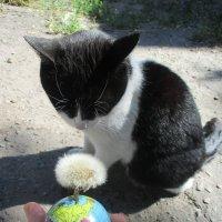 Кошка Шанти медитирует, глядя на планету-одуванчик!!!... :: Алекс Аро Аро