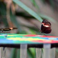 Бабочек заказывали?:-) :: Тамара Бедай