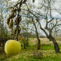 Последнее яблоко :: luchnik