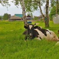 На краю деревни :: Сергей Чиняев