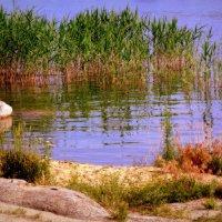 Рябь на воде :: Мила Бовкун