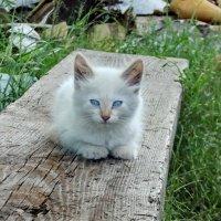 Рыжик в детстве :: Светлана Рябова-Шатунова