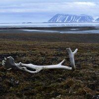 арктика :: Алексей Логинов