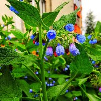 Цветы у дома :: Алла ZALLA