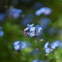 Полевые цветы :: Анжела Пасечник