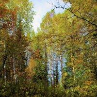 Лес :: Сергей Чиняев