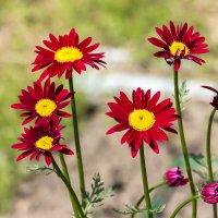 Цветочное настроение :: Нина Кутина