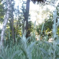 травы :: Smit Maikl