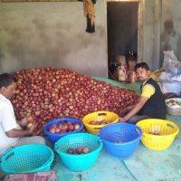 Наггарские яблочки :: Evgeni Pa
