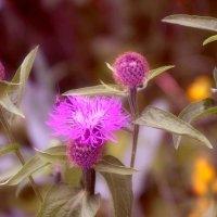 Летние цвета и цветы. :: Михаил Столяров