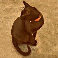 Черный кот :: Валерия Яскович