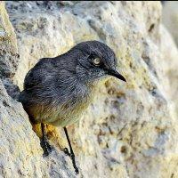 На скалах у Мертвого моря :: Vanda Kremer