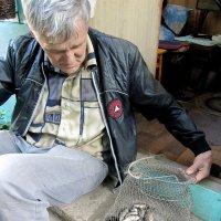 Улов для кота и  не только... :: Антонина Балабанова