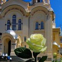 Монастырские розы :: OLLES