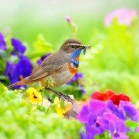 В летнем саду :: Влад