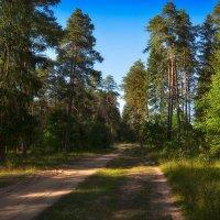 Прогулка по летнему лесу :: Алексей (GraAl)