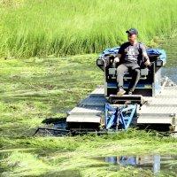 ,,Сенокос,, на пруду  3 :: Сергей