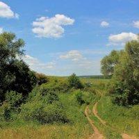И дорога уводит в поля... :: Наталья Лунева