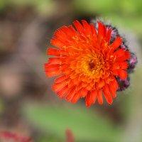 цветы :: Людмила Алейникова