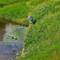 Среди полевых цветов и уток... :: Sergey Gordoff