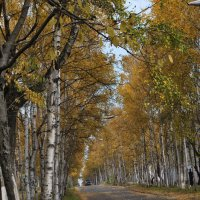 осень... :: Ирина Мозерова