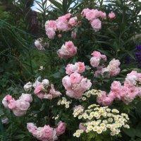 Нежное цветение :: minchanka