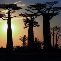 Мадагаскарский закат :: Евгений Печенин