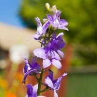 Эстафета цвета. Фиолетовое воскресенье - Три цветка :: Наталья (ShadeNataly) Мельник
