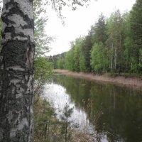 лесной пруд :: Владимир