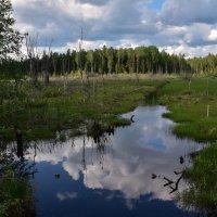 Лесное болотце. :: Татьяна Глинская