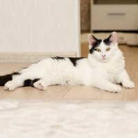 кошка дома :: Андрей Кривошапкин