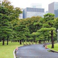 Городской парк Токио Япония :: Swetlana V
