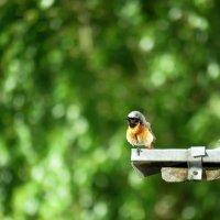 маленький птиц :: Валерия Яскович