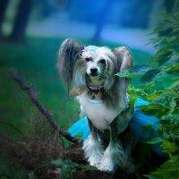 В заколдованном лесу :: Lika Shakhmatova