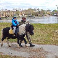 Пони - тоже кони! :) :: Елена (Elena Fly) Хайдукова