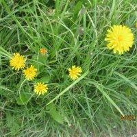 трава, лето :: Smit Maikl