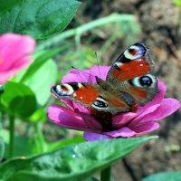 Цветы июля :: Liliya Kharlamova
