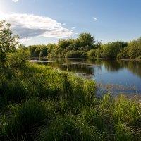 Летний пейзаж с озером :: Александр Синдерёв
