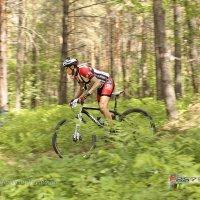 На скорости сквозь лес. :: Александр Иванов