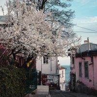 Кусочек весны в Ялте :: Анастасия Климова