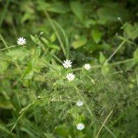 Цветы :: Руслан Хатавнер